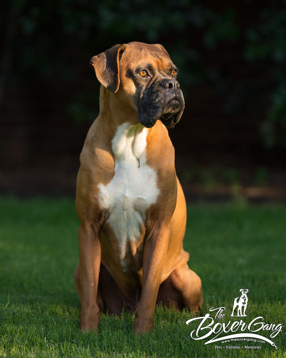 Zeus, the leader of The Boxer Gang