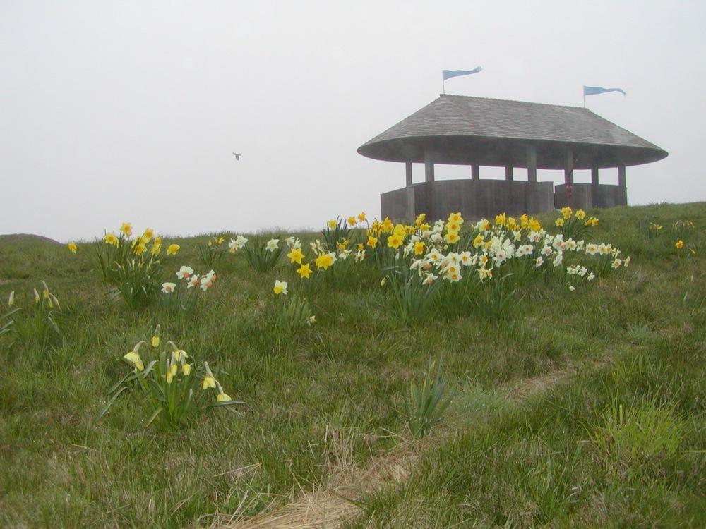 pavilion3.jpg