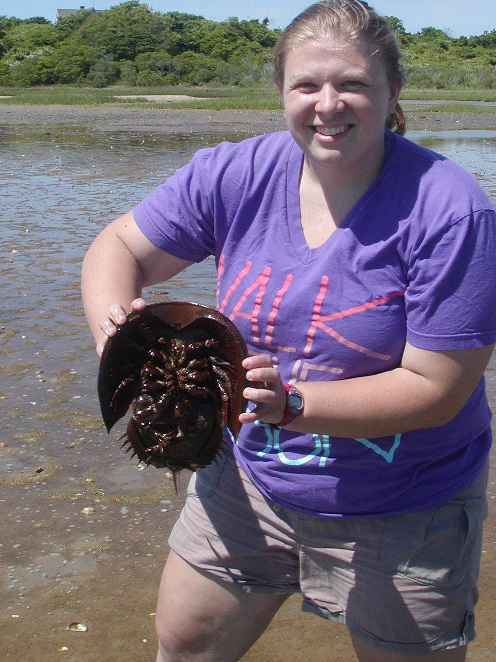 Me with a horseshoe crab found on Andy's Way.