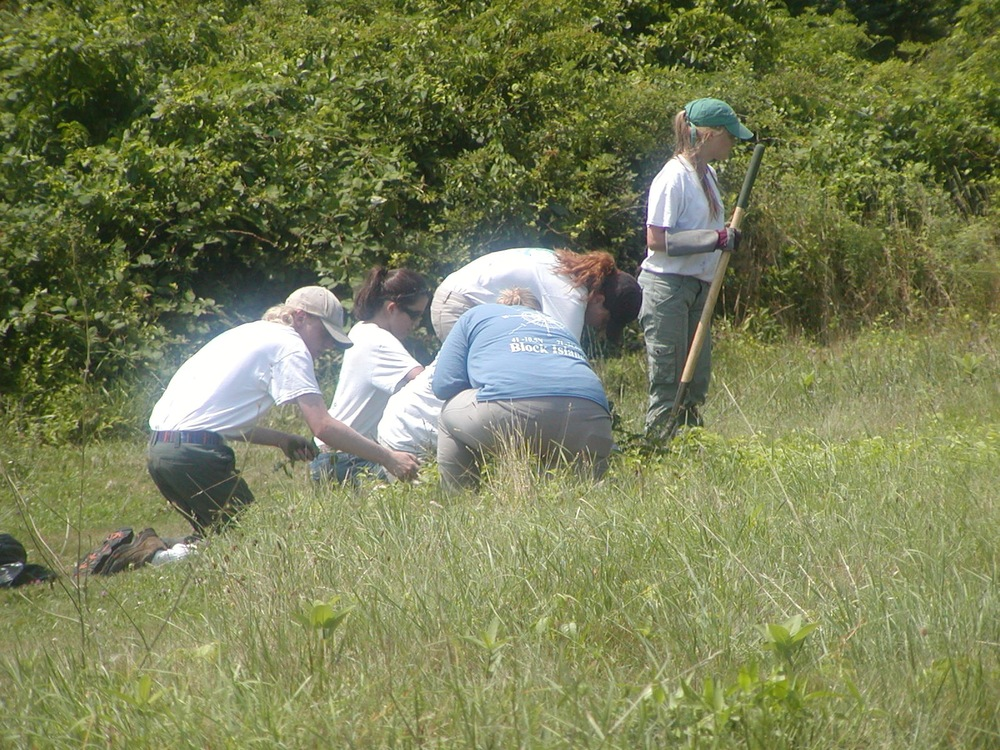 Some YCL members and I (blue shirt) removing some Black Swallow Wart from the middle of the field.