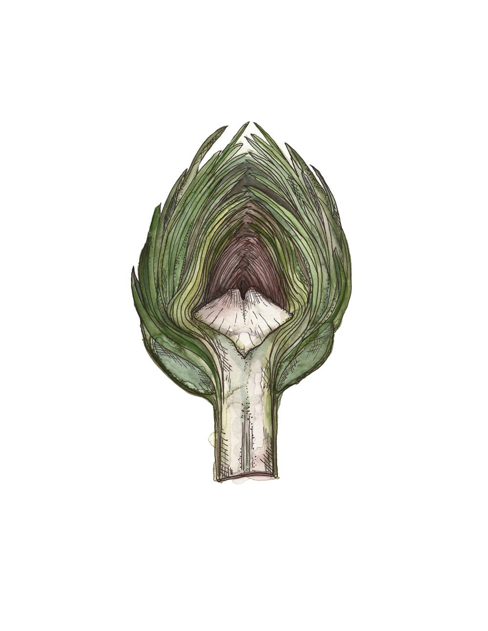 artichoke web.jpg