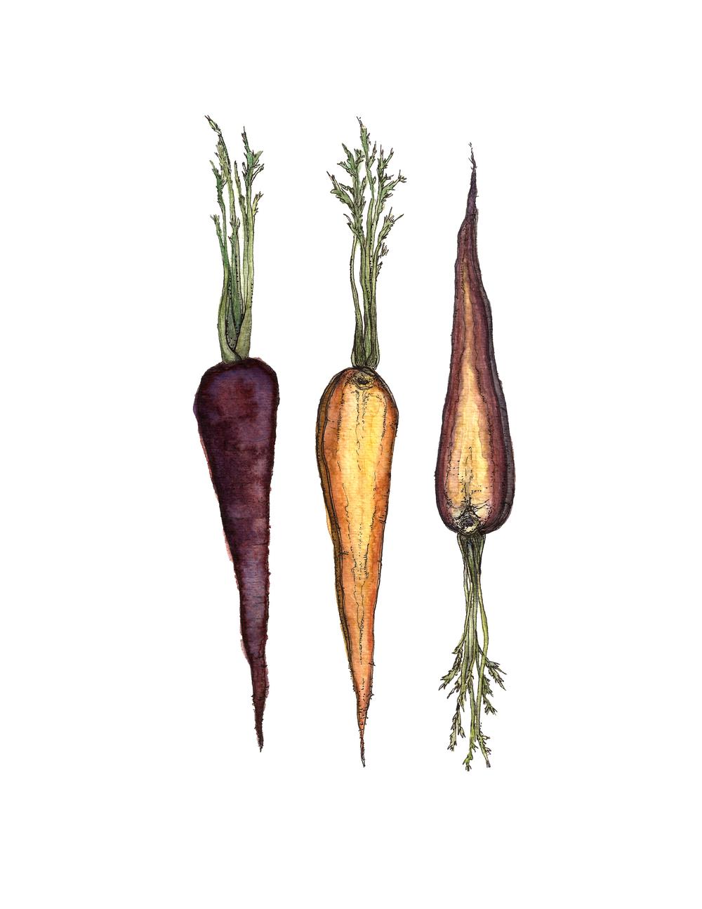 carrots web.jpg