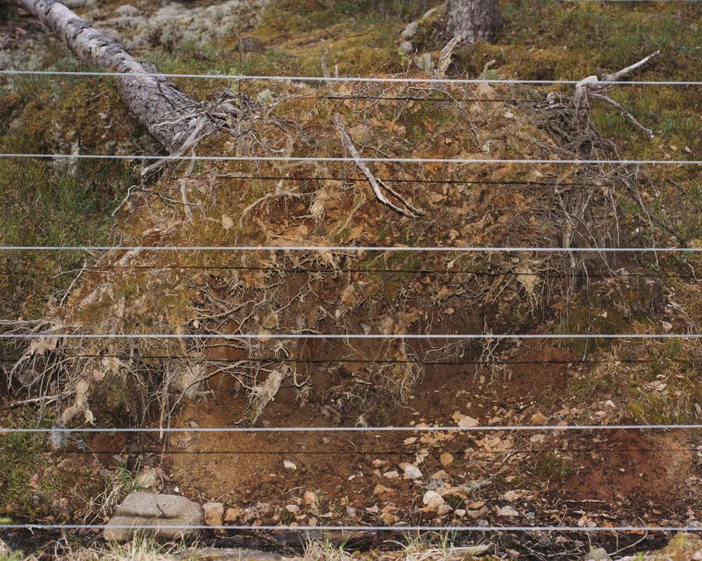 07-Finnskogen-Terje-Abusdal.jpg