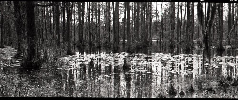 marshscene.jpg