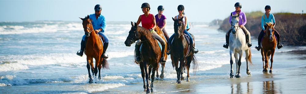 Equestrian 1.jpg