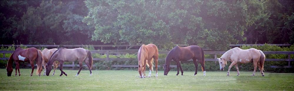 Equestrian 5.jpg