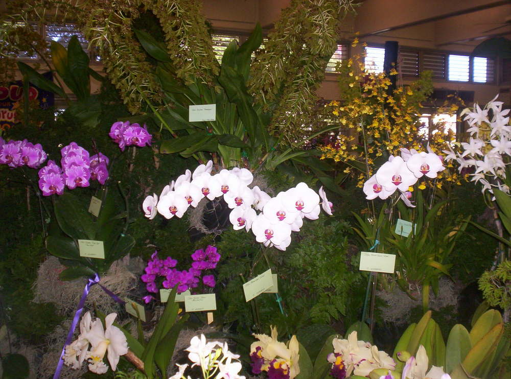 The prizewinning displays at a Hawaii orchid show