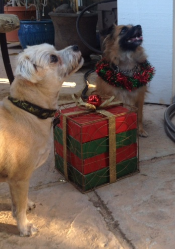 Think Siri will bring us holiday treats if we command nicely?