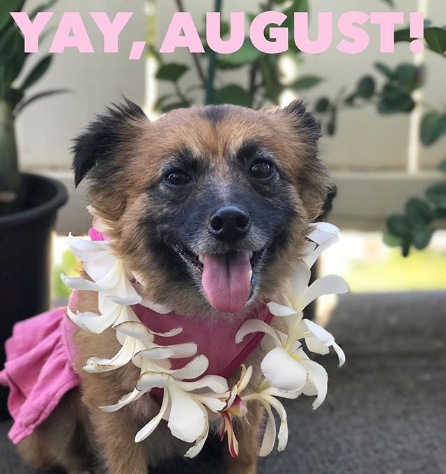 Cheers to August, may it be a good month for everyone! #dogsofhawaii