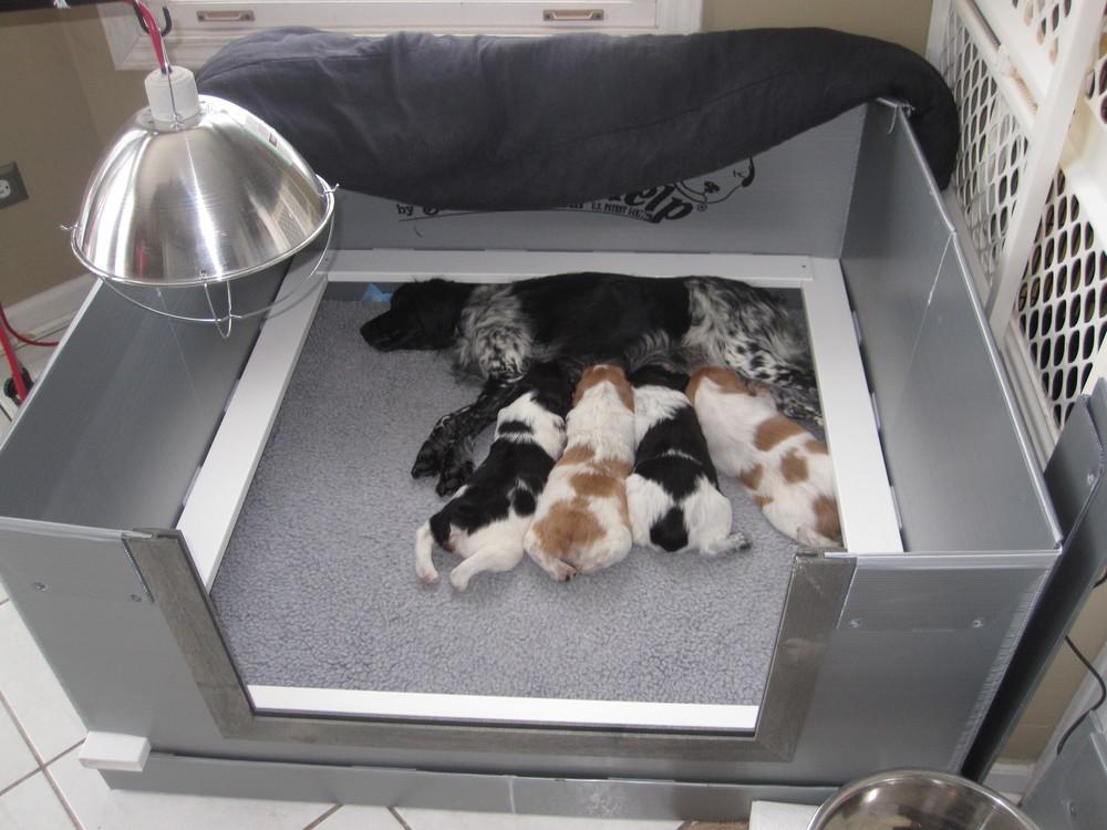 Puppys 069.JPG