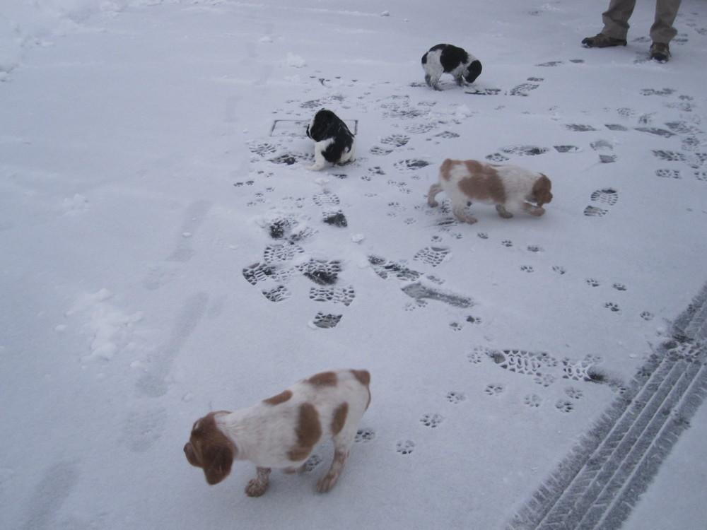 Puppys 199.JPG