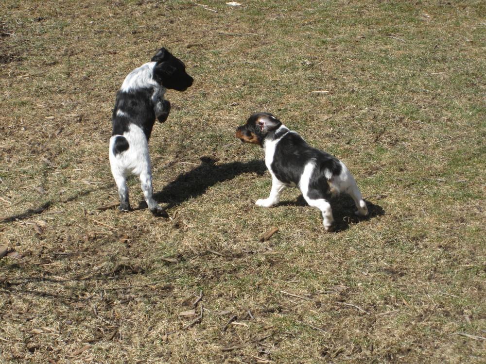Puppys 324.JPG