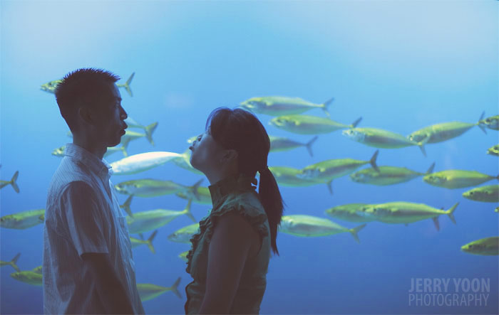 Monterey Bay Aquarium, Engagement shoot, engagement session, photography