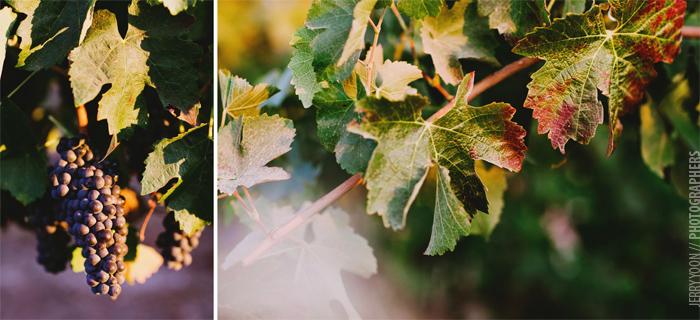 Brent_Creek_Winery_Livermore_Wedding-20.JPG
