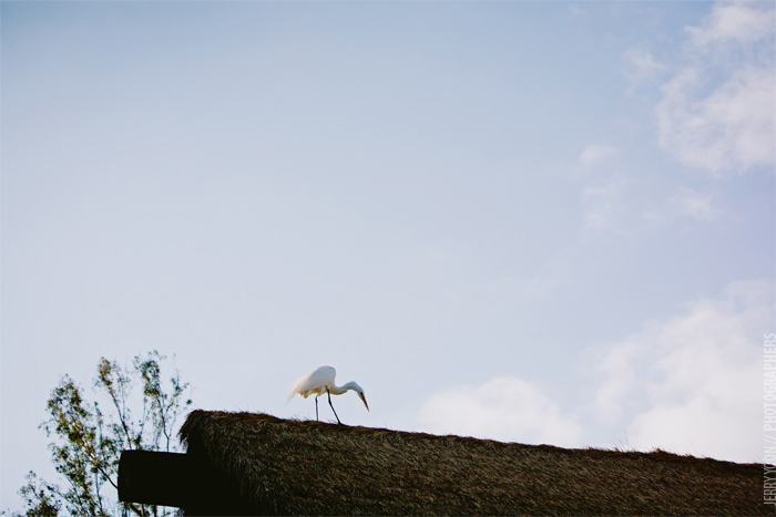 San_Diego_Wild_Animal_Park_Wedding-40.JPG