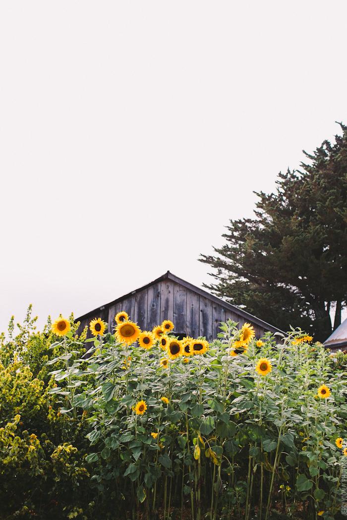 Chileno_Valley_Ranch_Petaluma_Wedding_Farm_Wedding-44.JPG