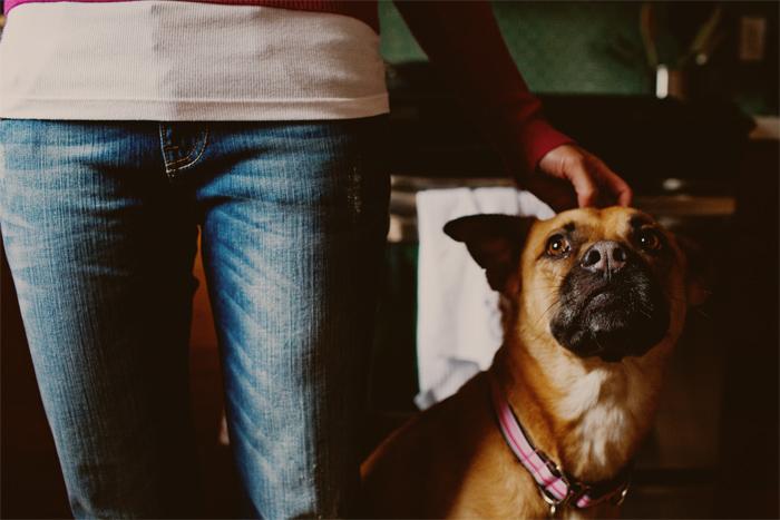 Dog_Engagement_Session_San_Francisco-04.JPG