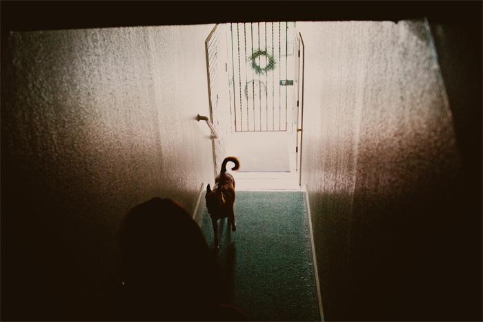 Dog_Engagement_Session_San_Francisco-06.JPG