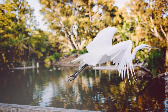 San_Diego_Wild_Animal_Park_Wedding-47.JPG
