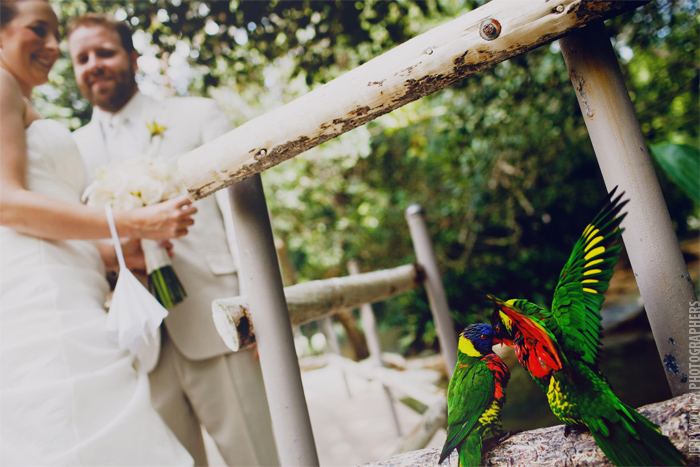 San_Diego_Wild_Animal_Park_Wedding-19.JPG
