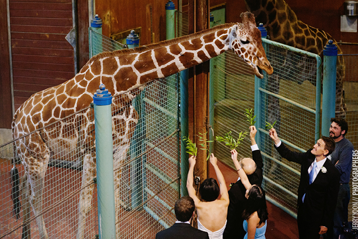 San_Francisco_Zoo_Wedding_Allison_Eli-27.JPG