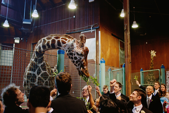 San_Francisco_Zoo_Wedding_Allison_Eli-23.JPG