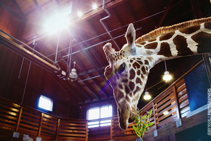 San_Francisco_Zoo_Wedding_Allison_Eli-21.JPG