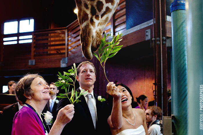 San_Francisco_Zoo_Wedding_Allison_Eli-20.JPG