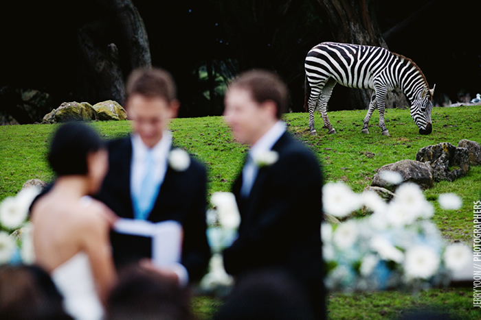 San_Francisco_Zoo_Wedding_Allison_Eli-18.JPG
