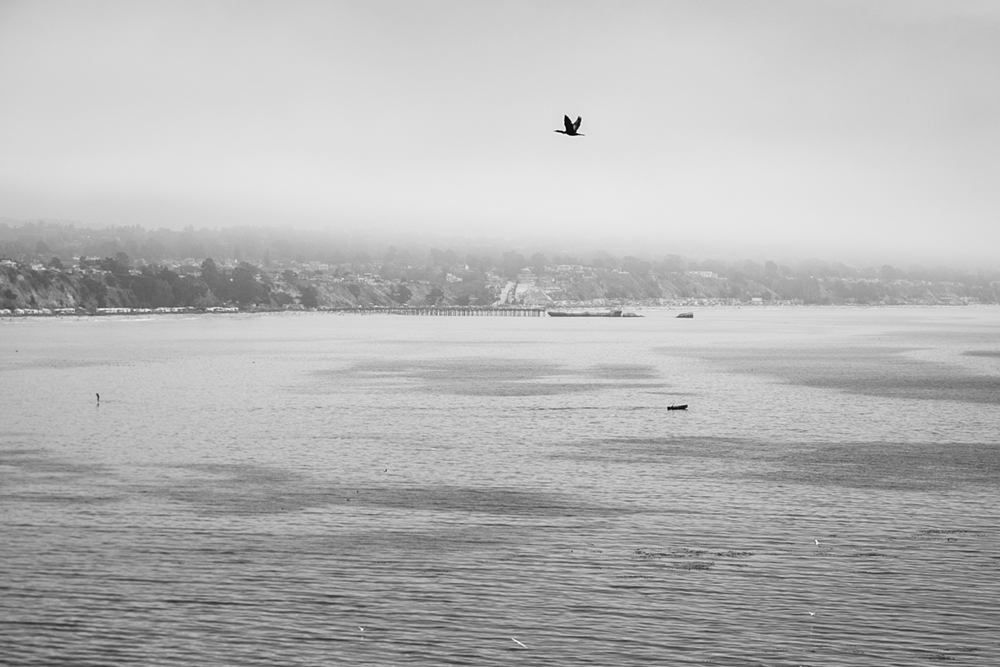 Monarch_Cove_Inn_Capitola_Wedding-02.JPG