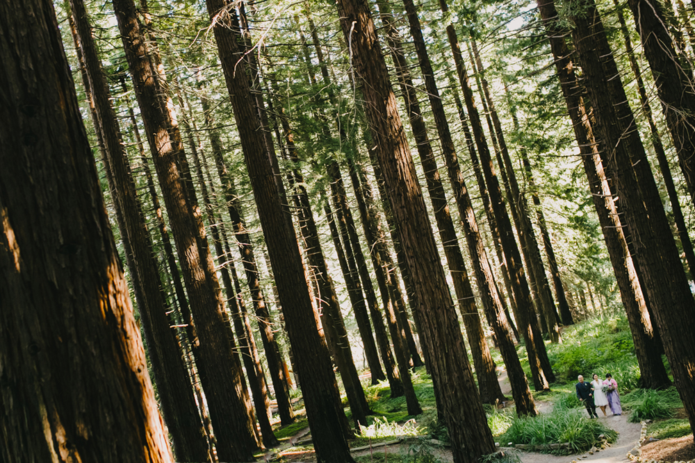 UC-Botanical-Garden-Mather-Redwood-Grove-Wedding-19.JPG