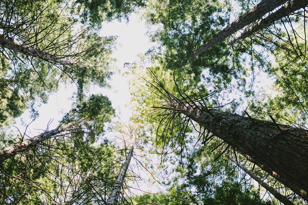 UC-Botanical-Garden-Mather-Redwood-Grove-Wedding-Details-16.JPG