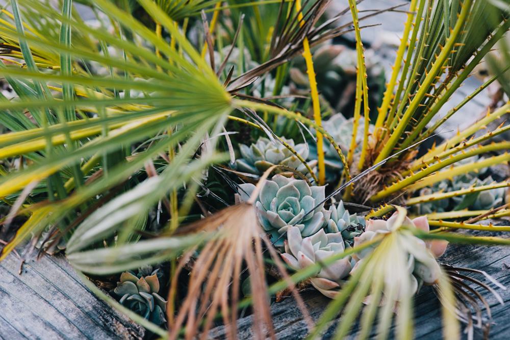 UC-Botanical-Garden-Mather-Redwood-Grove-Wedding-Details-33.JPG