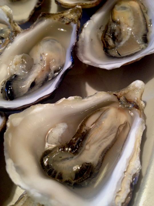 Oyster_Raw_web.jpg