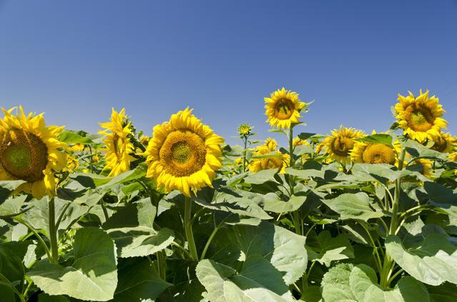 Digital Pollinators - Why Choose Us