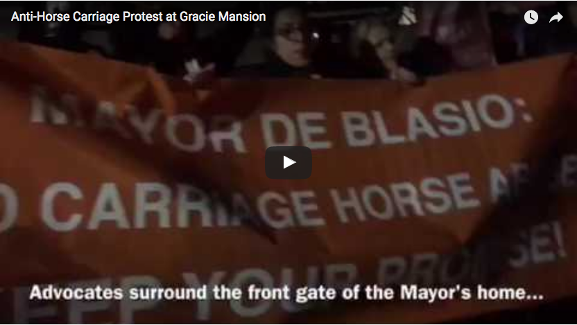 Enough is Enough! Protest at Gracie Mansion