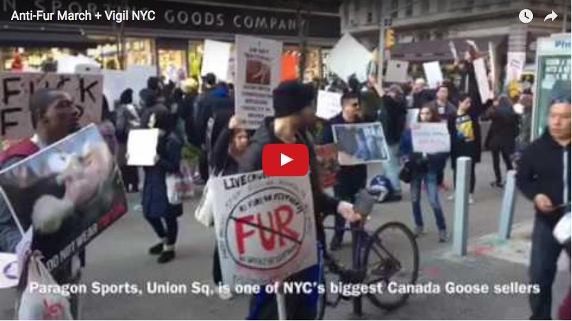 Anti-Fur March + Vigil, Feb. 2017