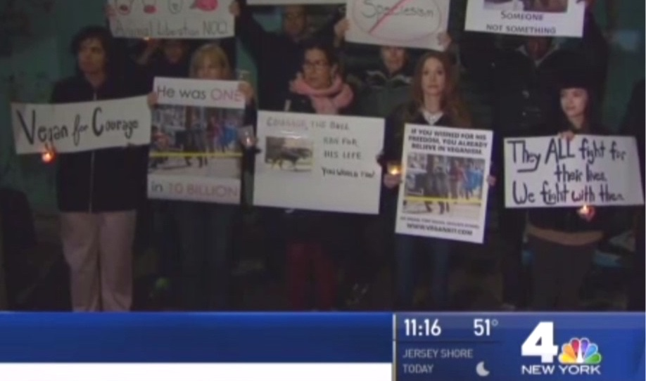 NBC (video+print):  Vigil Held for Rogue Bull Who Died After Wild Queens Chase