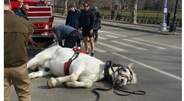 The Dodo (print):  Exhausted Carriage Horse Collapses In Street