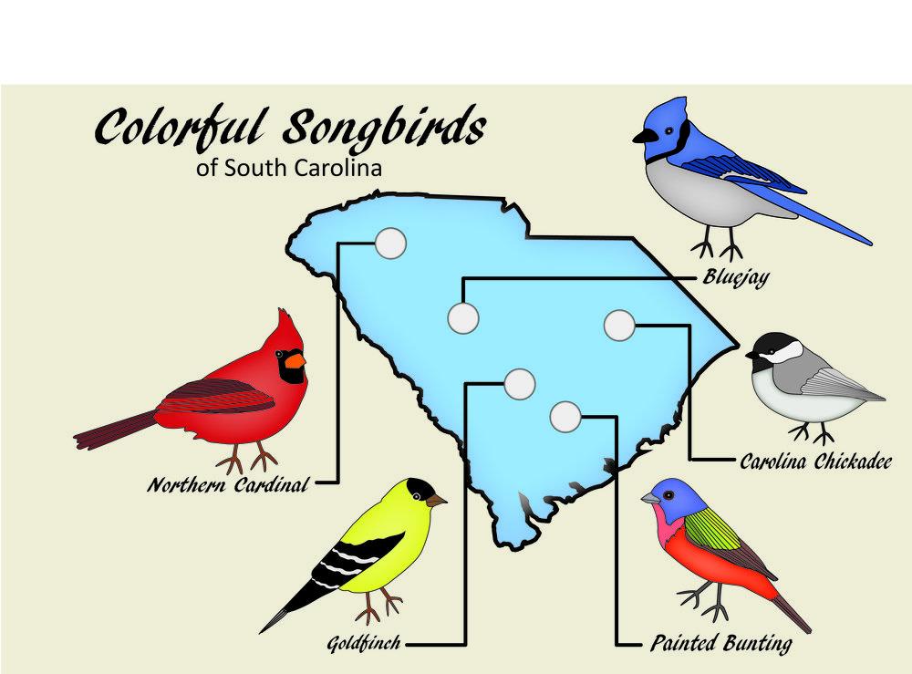 Colorful Songbirds carson myers.jpg
