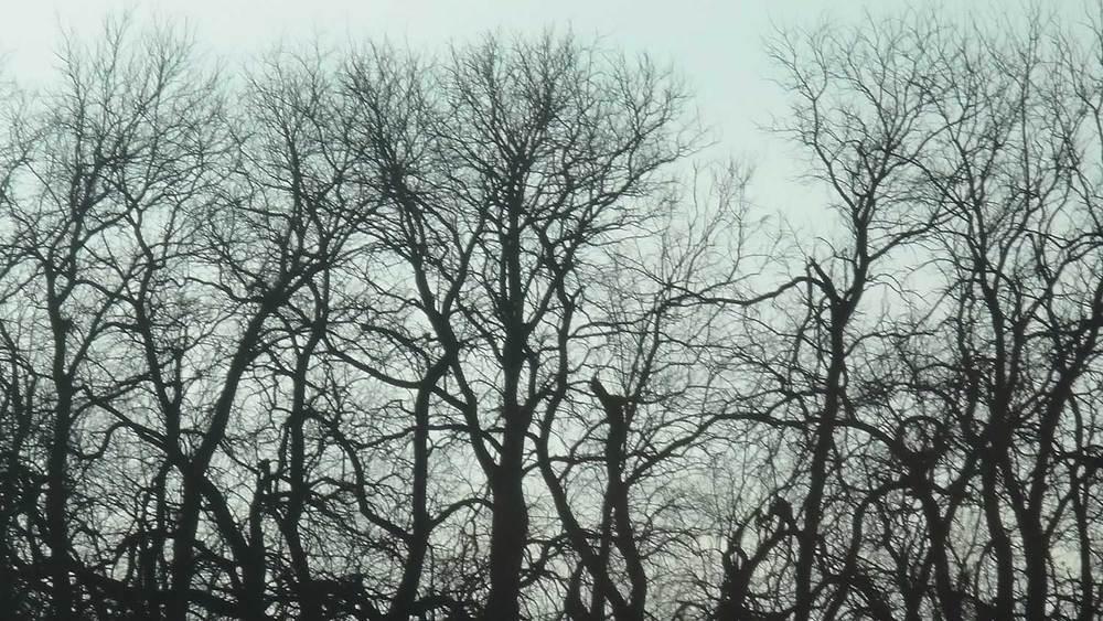 Grygutis_DAWN'S-SILVER-LINING_Salina-Kansas_07.jpg