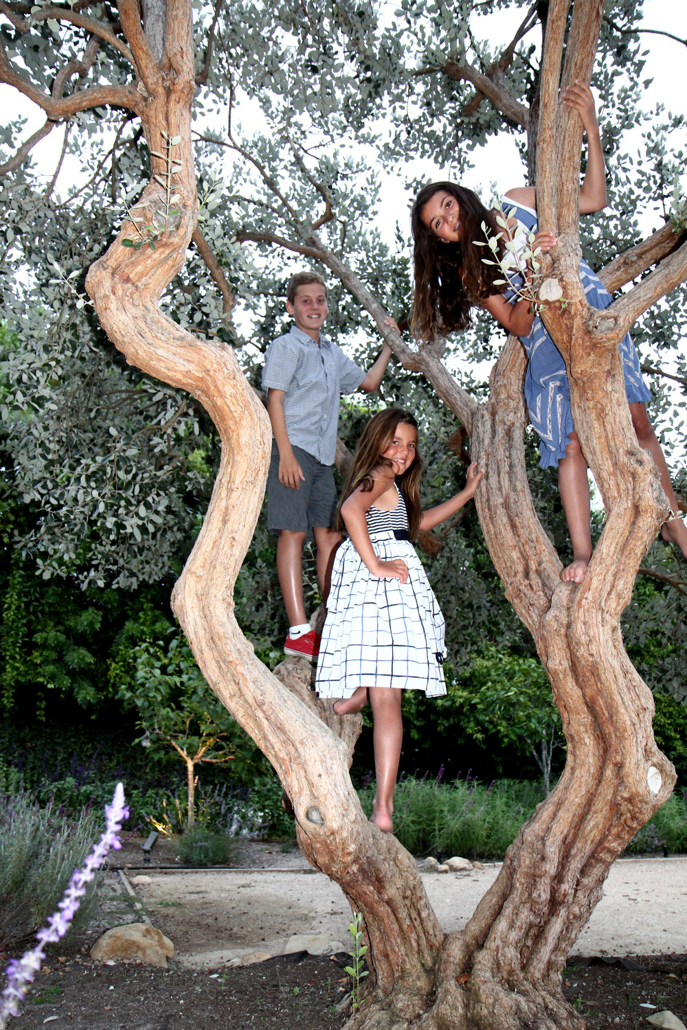 Pineapple guava tree with children.JPG