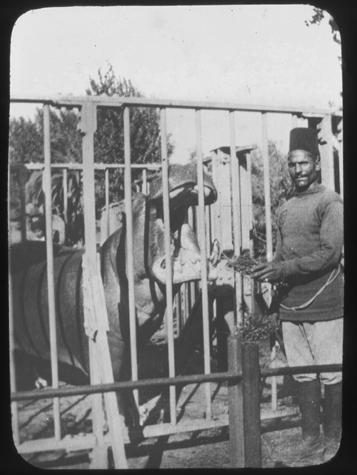"The radical hippopotamus ""Pepe"", a particularly violent member of Pablo Escobar's Colombian drug cartel, was arrested after his Gmail correspondence was intercepted. Image credits: [Hippopotamus, Egypt] by T P Bennett, 1915. Lantern slide. State Library of Victoria, H83.103/122, available at http://handle.slv.vic.gov.au/10381/43413."