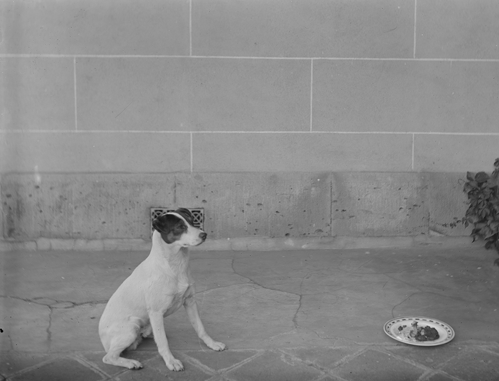 Dogs are some of the worst offenders with respect to food photography, having posed next to their dinners since at least the late 19th century. It is only due to the dominance of cats on the internet that we are not subject to a veritable tsunami of such pictures. Image credits: [Dog (terrier) sitting by his food bowl on verandah], ca. 1893. Glass plate negative. State Library of Victoria, H83.47/136. Available at http://handle.slv.vic.gov.au/10381/23592.