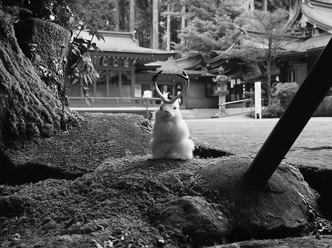 …Wollaston gave me these photographs, he got them from his friend in the Foreign Office, when he was travelling in Japan. They suggest the jackalope and its variants are not native only to America and Europe—that indeed variations of this species can be found all over the world. Though Darwin appeared to have found nothing like it during his voyages.