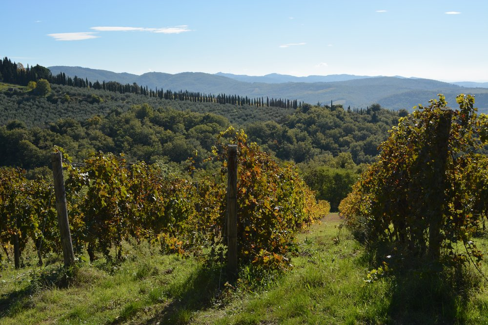 ladolcevigna_tuscany_bike_11-a.jpg