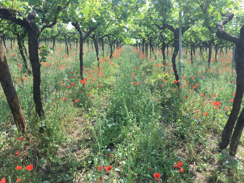 Best Puglia Basilicata Wine Tour - Vineyards - La Dolce Vigna Wine Tours