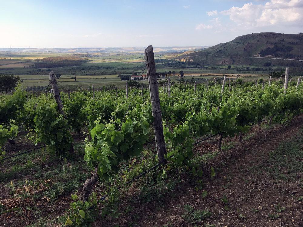 La Dolce Vigna_Basilicata Wine Tour_Vulture