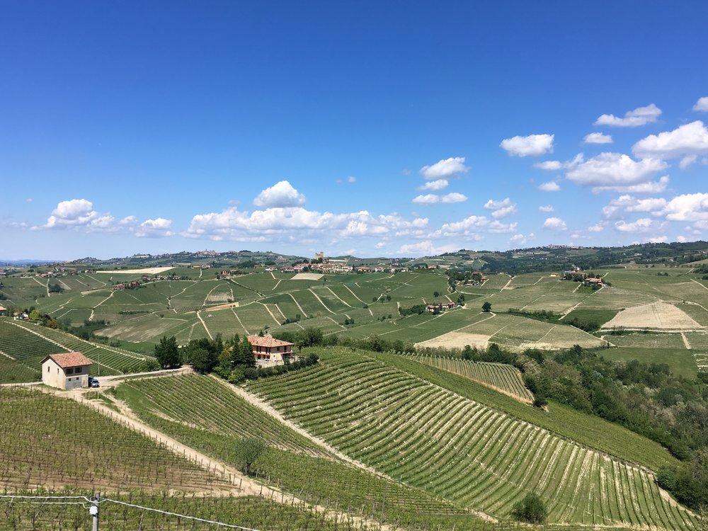 Piemonte Wine Tour - Langhe