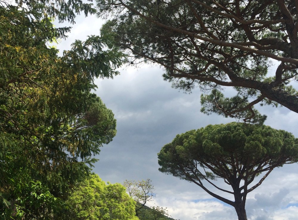 Blissful Yoga Retreat in Tuscany - umbrella pines